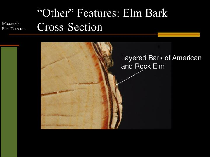 """Other"" Features: Elm Bark Cross-Section"