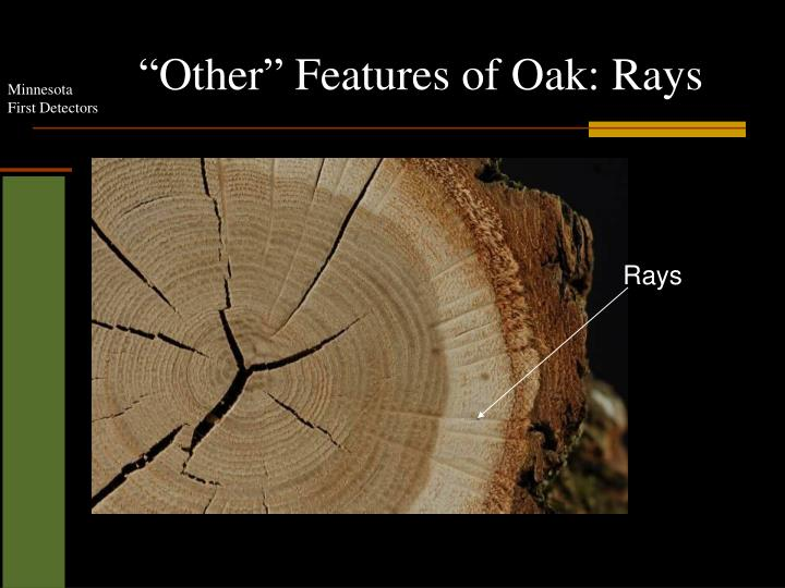 """Other"" Features of Oak: Rays"