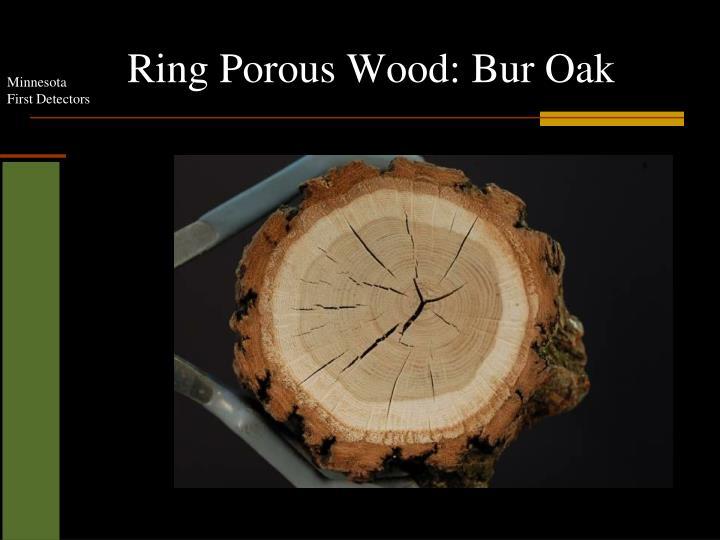 Ring Porous Wood: Bur Oak