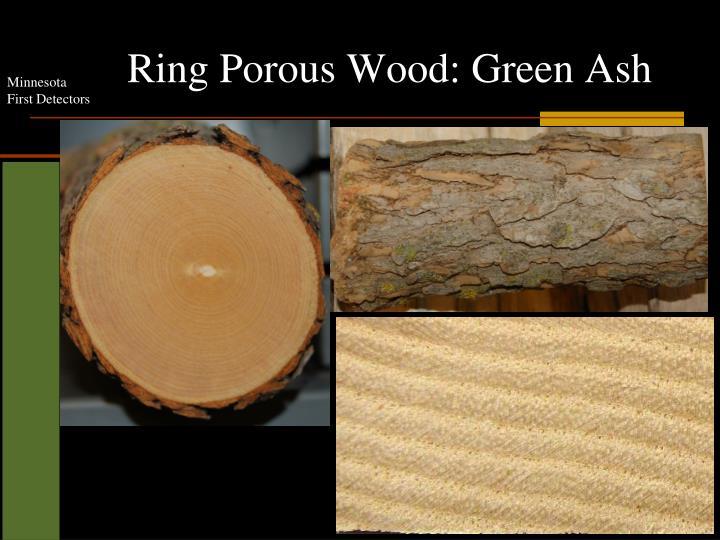 Ring Porous Wood: Green Ash