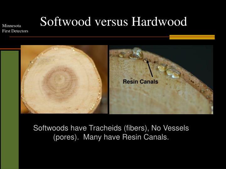 Softwood versus Hardwood