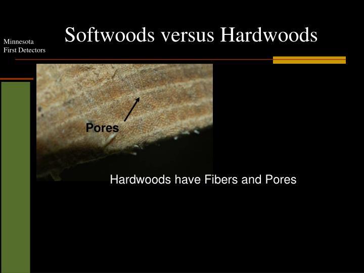Softwoods versus Hardwoods