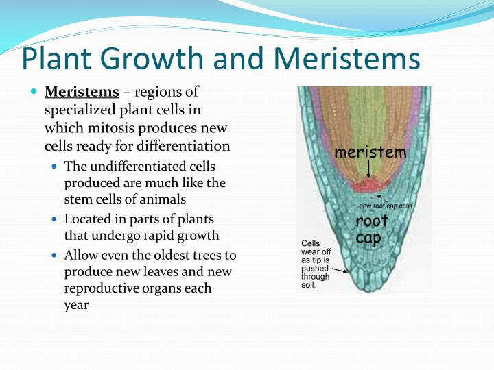 Plant Growth and