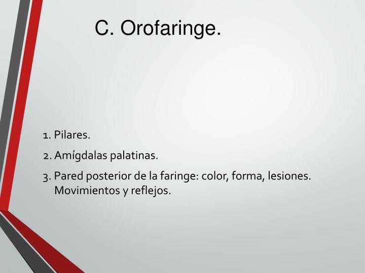 C. Orofaringe.