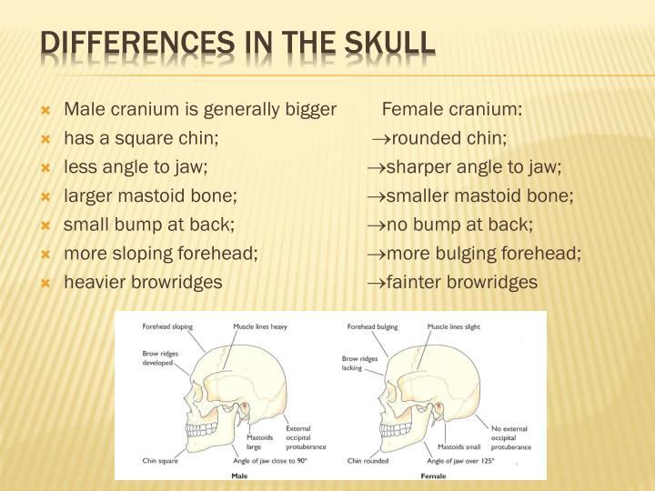 Male cranium is generally bigger   Female cranium: