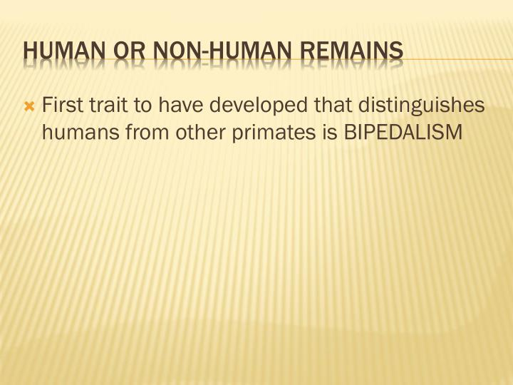 First trait to have developed that distinguishes humans from other primates is BIPEDALISM