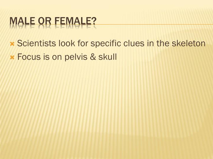 Scientists look for specific clues in the skeleton
