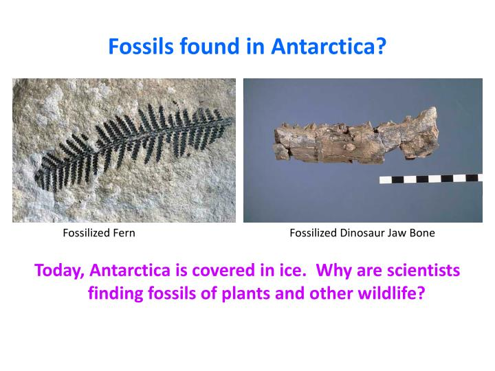 Relative dating techniques of fossils