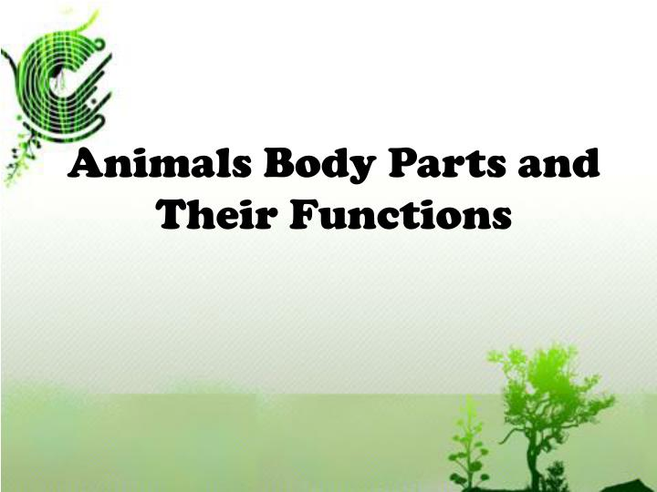 Animals Body Parts and Their Functions