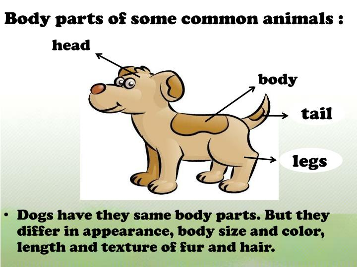 Body parts of some common animals :