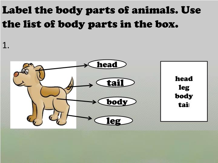 Label the body parts of animals. Use the list of body parts in the box