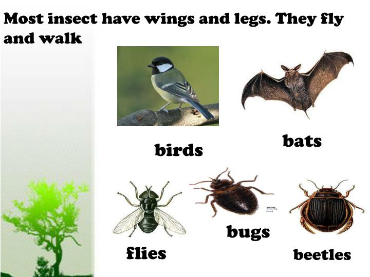 Most insect have wings and legs. They fly and walk