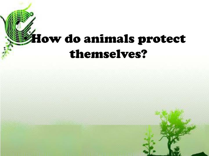 How do animals protect themselves?