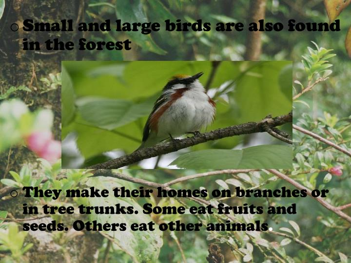 Small and large birds are also found in the forest