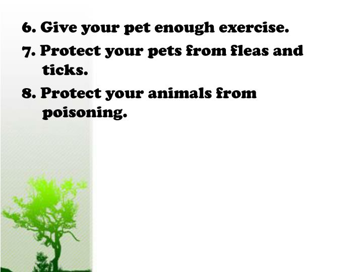 6. Give your pet enough exercise.