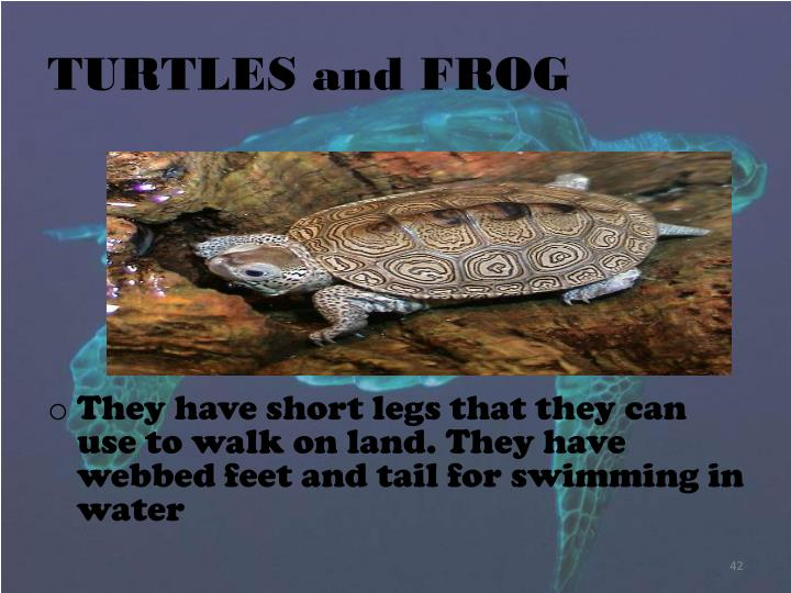TURTLES and FROG