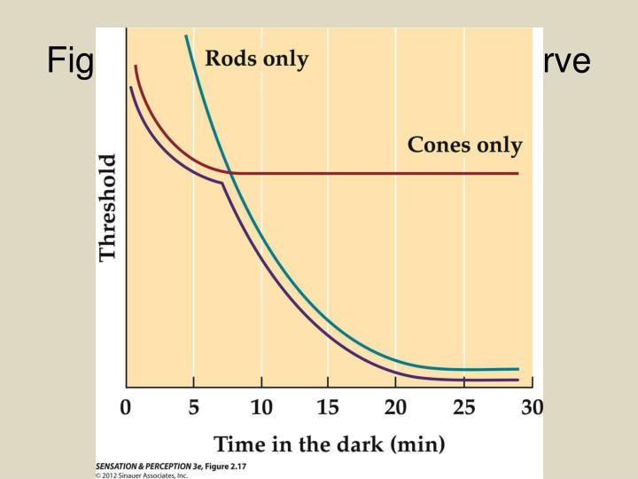 Figure 2.17  Dark adaptation curve
