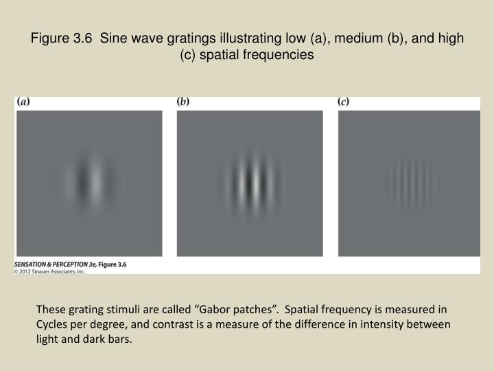 Figure 3.6  Sine wave gratings illustrating low (a), medium (b), and high (c) spatial frequencies