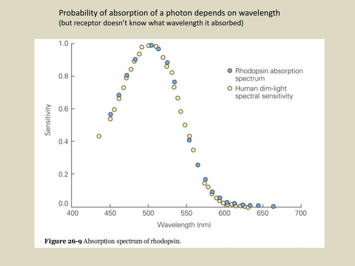 Probability of absorption of a photon depends on wavelength