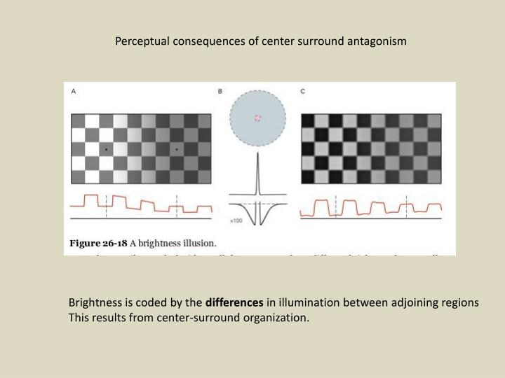 Perceptual consequences of center surround antagonism