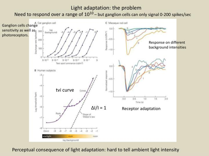 Light adaptation: the problem