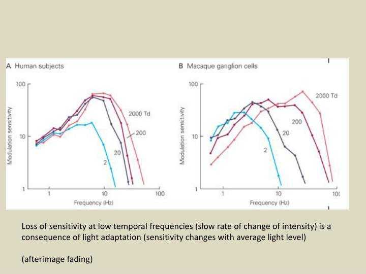 Loss of sensitivity at low temporal frequencies (slow rate of change of intensity) is a
