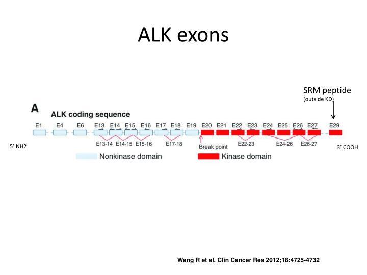 ALK exons