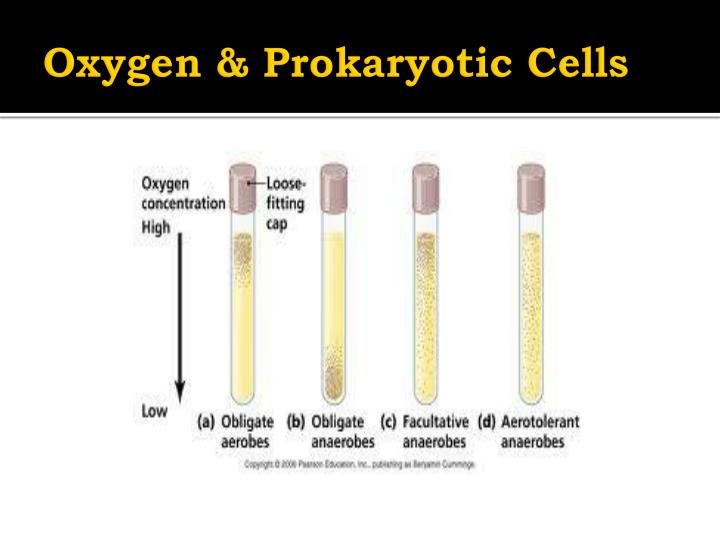 Oxygen & Prokaryotic Cells