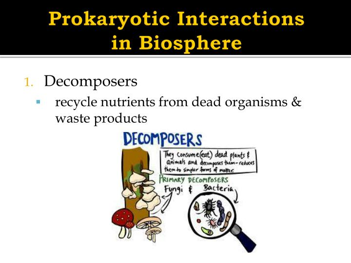 Prokaryotic Interactions