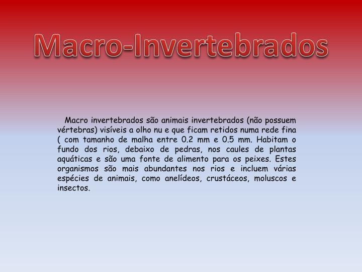 Macro-Invertebrados