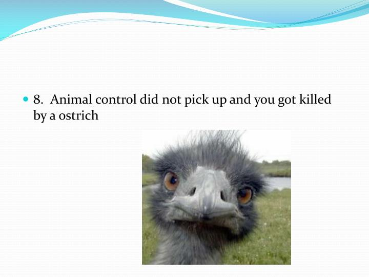 8.  Animal control did not pick up and you got killed by a ostrich