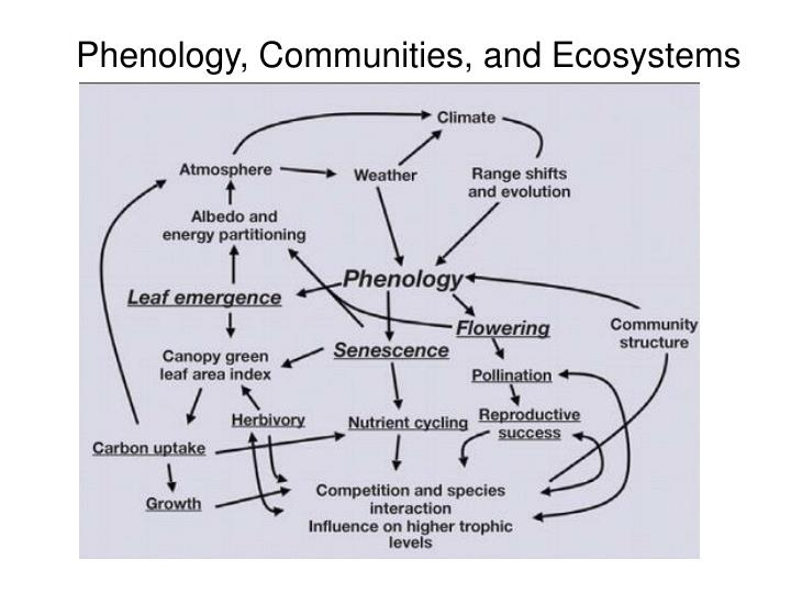 Phenology, Communities, and Ecosystems