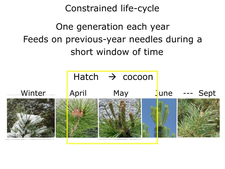Constrained life-cycle