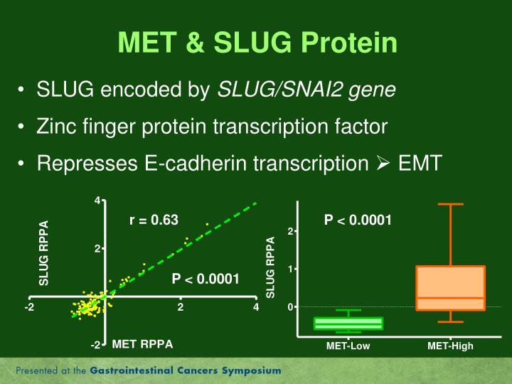 MET & SLUG Protein