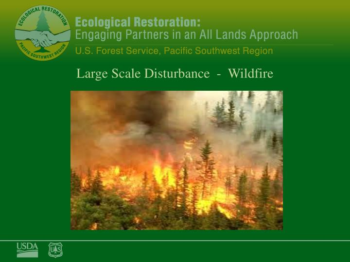 Large Scale Disturbance  -  Wildfire