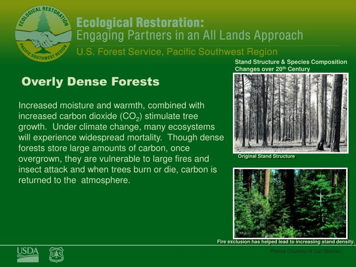 Overly Dense Forests