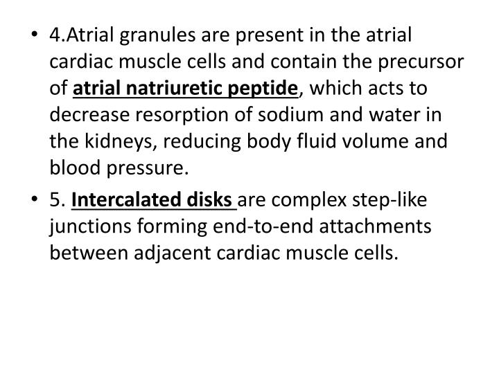 4.Atrial granules are present in the atrial cardiac muscle cells and contain the precursor of