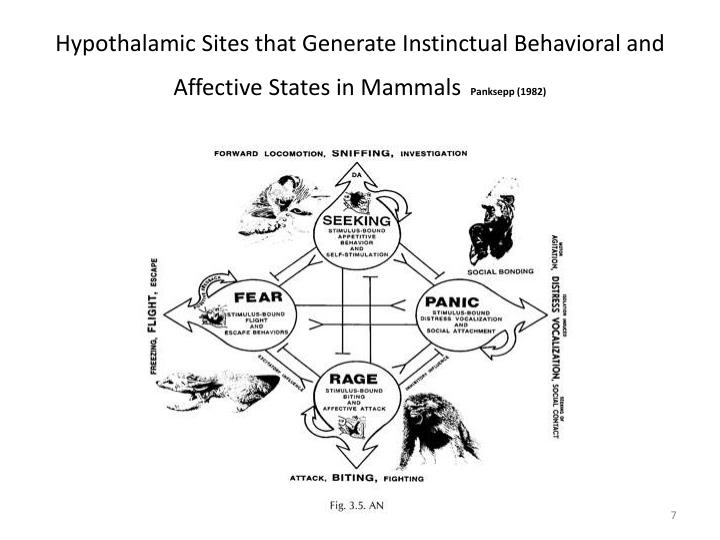Hypothalamic Sites that Generate Instinctual Behavioral and Affective States in Mammals