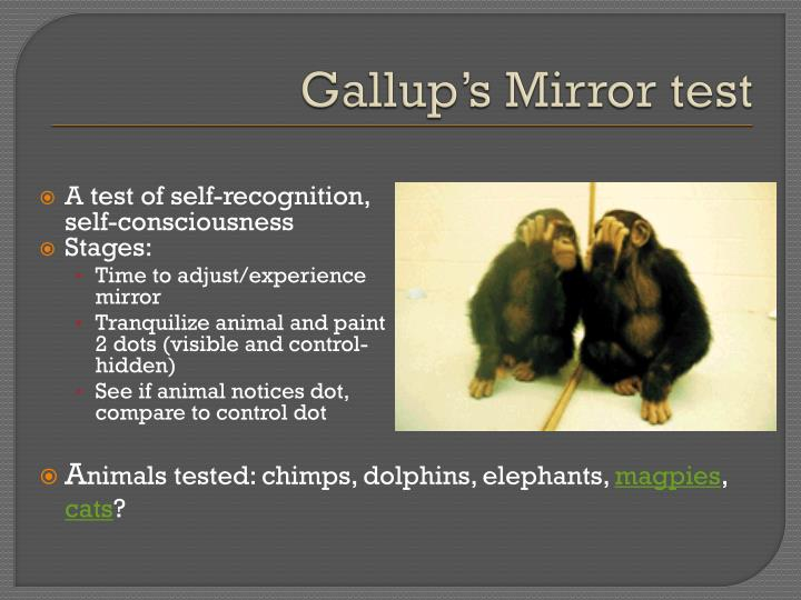 Gallup's Mirror test