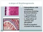 2 steps of dentinogenesis