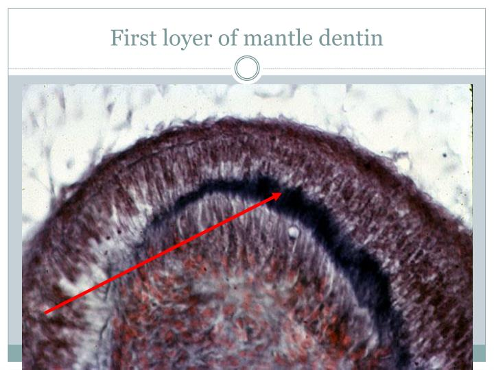 First loyer of mantle dentin