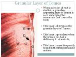 granular layer of tomes