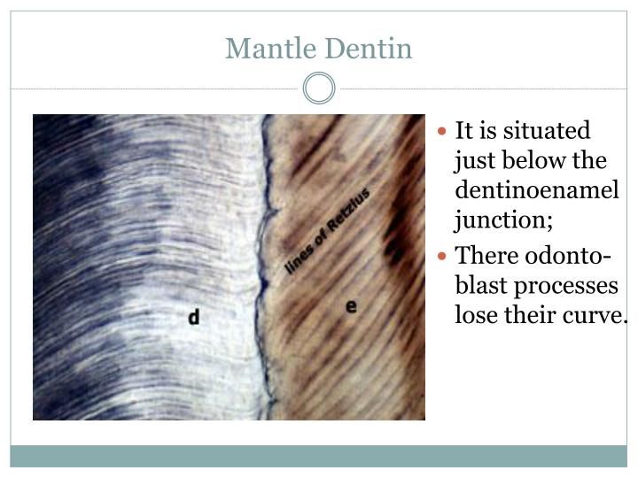Mantle Dentin