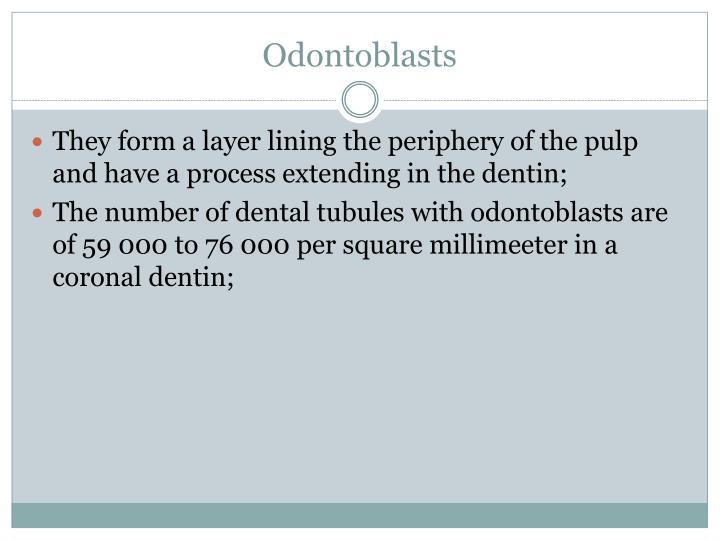 Odontoblasts