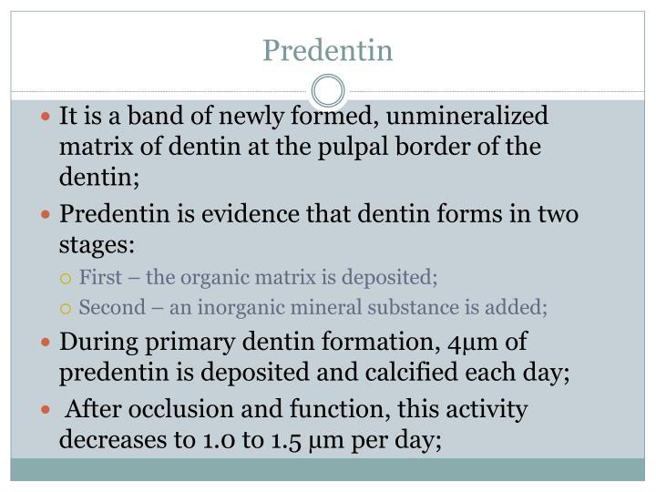 Predentin