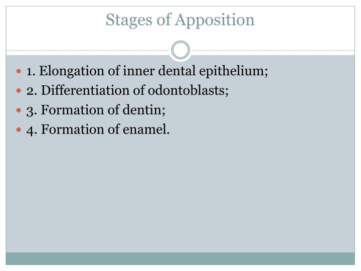 Stages of Apposition