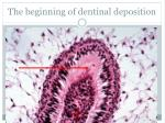 the b eginning of dentinal deposition