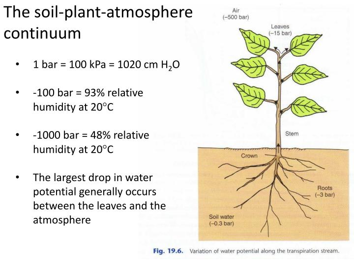 The soil-plant-atmosphere continuum