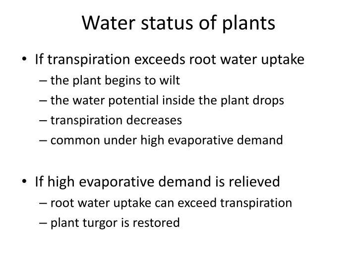 Water status of plants