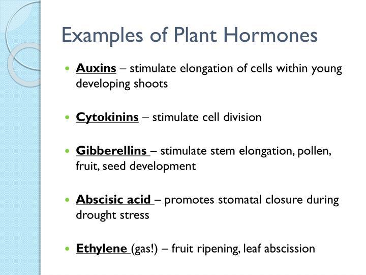 Examples of Plant Hormones